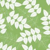 Verde senza giunte ed il bianco lasciano il reticolo della priorità bassa Fotografia Stock