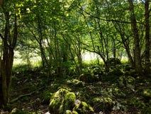Verde-simbolo della natura Fotografia Stock