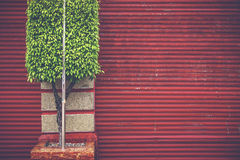 Verde su colore rosso Fotografie Stock