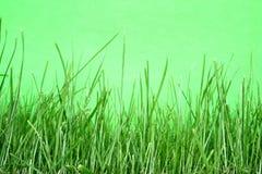 Verde su verde Fotografia Stock