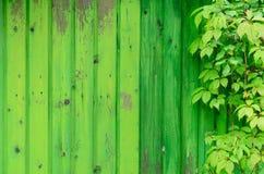 Verde su verde Immagine Stock