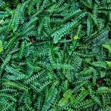 Verde su verde, Botanisher Garten, Berlino Immagini Stock Libere da Diritti