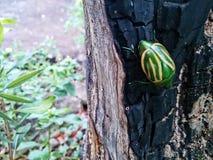 Verde sul vecchio tronco Immagini Stock