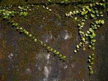 Verde sulla parete Fotografia Stock