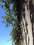 Verde sulla parete Immagine Stock Libera da Diritti