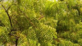 Verde tan fresco Fotografía de archivo