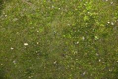 Verde textured Fotografia de Stock Royalty Free