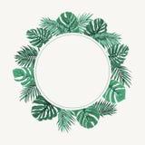 Verde tropical exótico del marco de la frontera de la guirnalda de las hojas stock de ilustración
