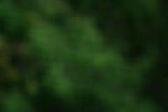 Verde verde do fundo, fundo, obscuridade, Foto de Stock