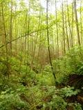 Verde, verde, verde Fotos de Stock Royalty Free