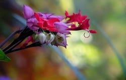 Verde vermelho cor-de-rosa Imagem de Stock Royalty Free