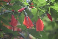Verde vermelho da flor do jardim bonito fotografia de stock royalty free