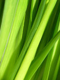 Verde vital Fotografía de archivo libre de regalías
