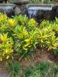 Verde y amarillo Foto de archivo libre de regalías