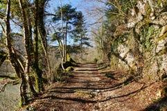 Verde y el caminar de la sombra Foto de archivo