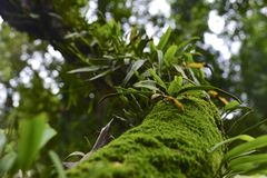 Verde y húmedo Imagen de archivo