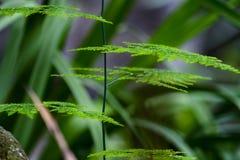 Verde y hojas de la placa del arbusto en jardín fotografía de archivo libre de regalías