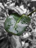Verde y negro Imagen de archivo libre de regalías