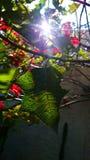 Verde y rojo Imagenes de archivo