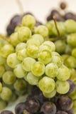 Verde y uvas de Borgoña Foto de archivo