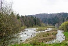 Verdeeld bed van de rivier Prut royalty-vrije stock afbeelding