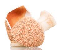 Verdeeld in twee delen ceramische die vaas op wit wordt geïsoleerd royalty-vrije stock afbeelding