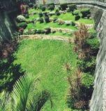 verdes Imagem de Stock