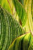 Verdes abstractos Fotos de archivo