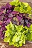 Verdes da mola Imagem de Stock Royalty Free