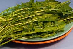 Verdes de Dandalion Fotos de archivo