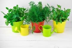 Verdes de la condimentación en cubos Imagenes de archivo