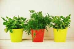 Verdes de la condimentación en cubos Foto de archivo libre de regalías