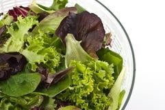 Verdes de la ensalada Foto de archivo libre de regalías