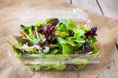 Verdes de la ensalada Imagenes de archivo