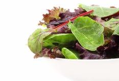 Verdes de la ensalada mezclada Fotografía de archivo