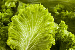 Verdes de mostaza crudos orgánicos foto de archivo libre de regalías