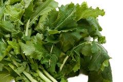Verdes de nabo nutritivos Foto de archivo libre de regalías