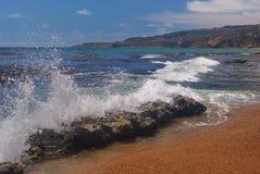 verdes de palos de crabot de plage Photographie stock