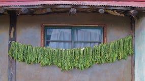 Verdes de secagem Fotografia de Stock Royalty Free