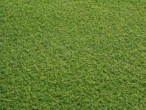 Verdes del golf Fotos de archivo libres de regalías