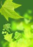 Verdes del verano Fotografía de archivo libre de regalías