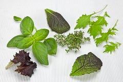 Verdes e especiarias da salada Fotografia de Stock