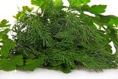 Verdes frescos - salsa e o aneto, close up Foto de Stock