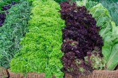 Verdes frescos y lechuga en el mercado contrario. Foto de archivo