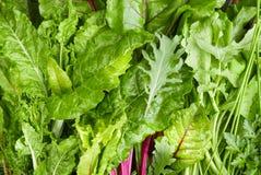 Verdes frondosos escuros da salada imagens de stock