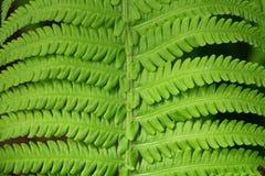 Verdes na primavera Foto de Stock Royalty Free