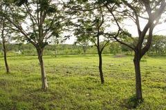 Verdes na região do Maharashtra, Índia foto de stock
