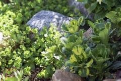 Verdes nas rochas ensolaradas fotografia de stock royalty free
