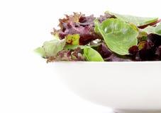 Verdes orgânicos da salada Foto de Stock