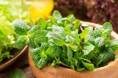Verdes para a salada saudável fresca Imagens de Stock